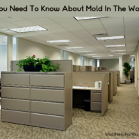 Mold In The Workplace