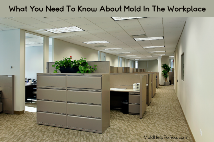 A clean looking office as an example of no mold in the workplace