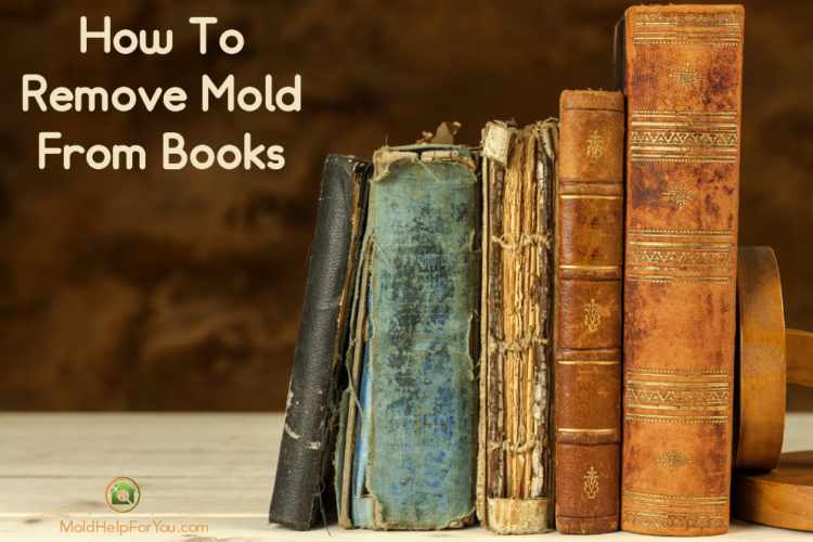 6 old books with mold leaning against a book end on a table