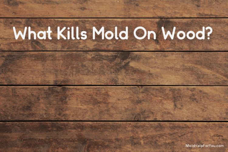 "a distressed wood panel with the words ""What Kills Mold On Wood"" written in white letters"