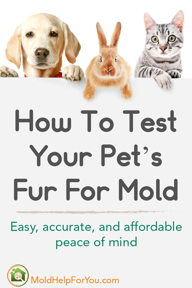 A golden lab puppy, a peach bunny, and a striped kitten holding a sign that says How To Test Your Pet's Fur For Mold