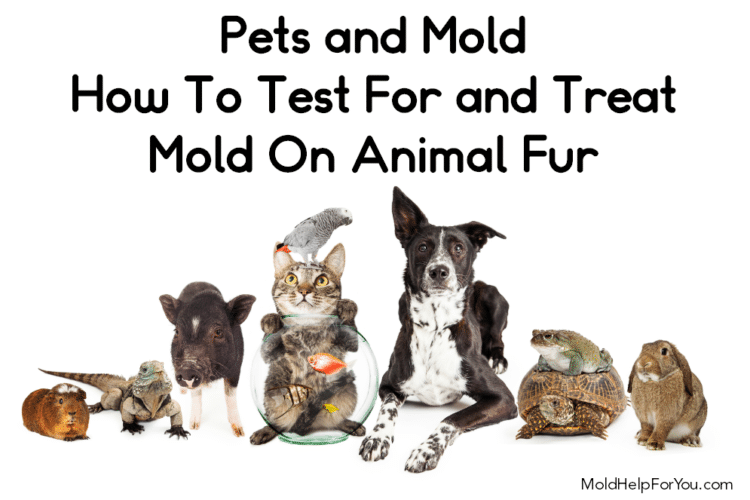 """A collage of various housepets with the title """"how to test for and treat mold on animal fur"""" written in black"""