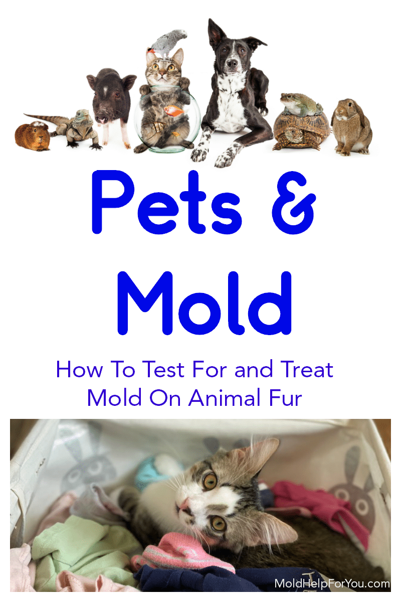 "A collage of various housepets with the title ""how to test for and treat mold on animal fur"" written in black"