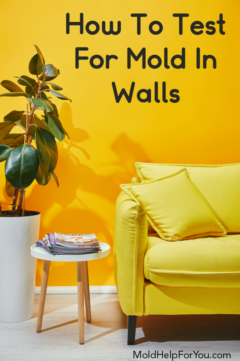 A yellow painted wall with a ficus plant, end table, and yellow leather sofa infront of it with a sign that says how to test for mold in walls